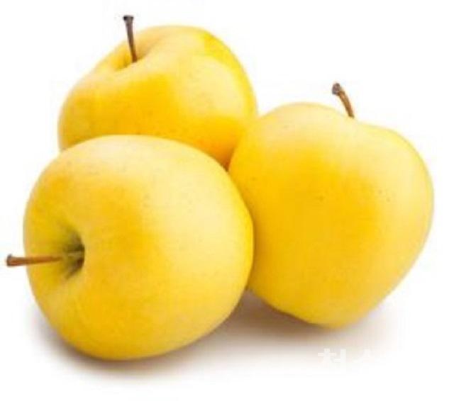190906보도자료(산소카페 청송군, 황금사과를 낳다-청송황금사과).jpg