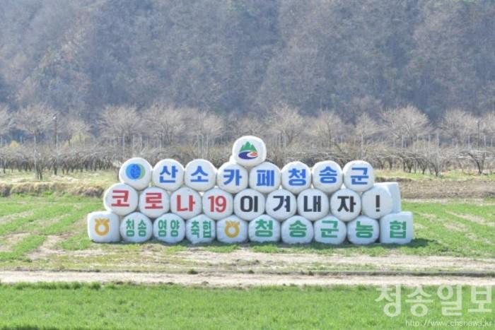 200325보도자료(산소카페 청송군 들녘 코로나19 극복 응원 메시지 눈길) (1).jpg