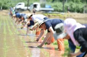 청송군 농민회, 통일쌀 손모내기 행사 개최