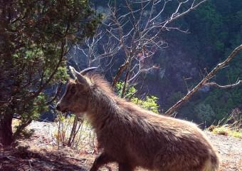 야생동물의 낙원, 주왕산국립공원!